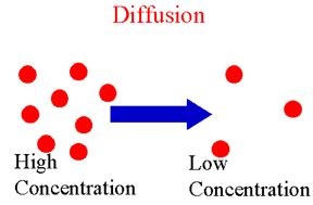 Lab report on diffusion and osmosis - College Homework